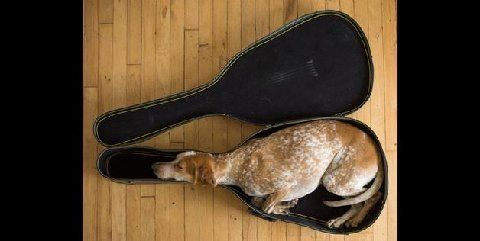 dog in guitar case