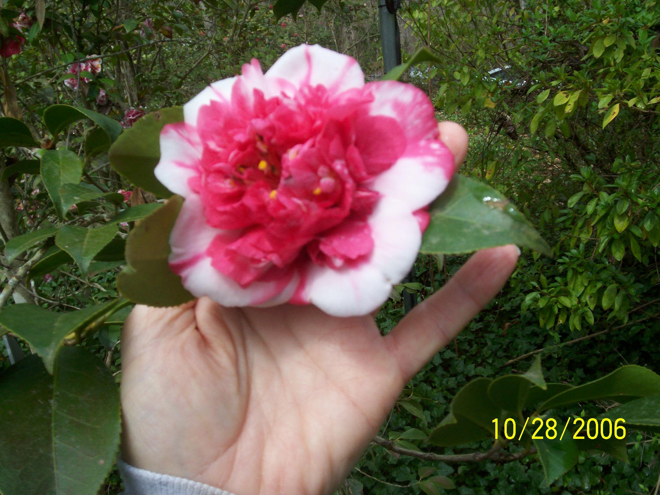 Flowers 3-28-2010 007 - Copy