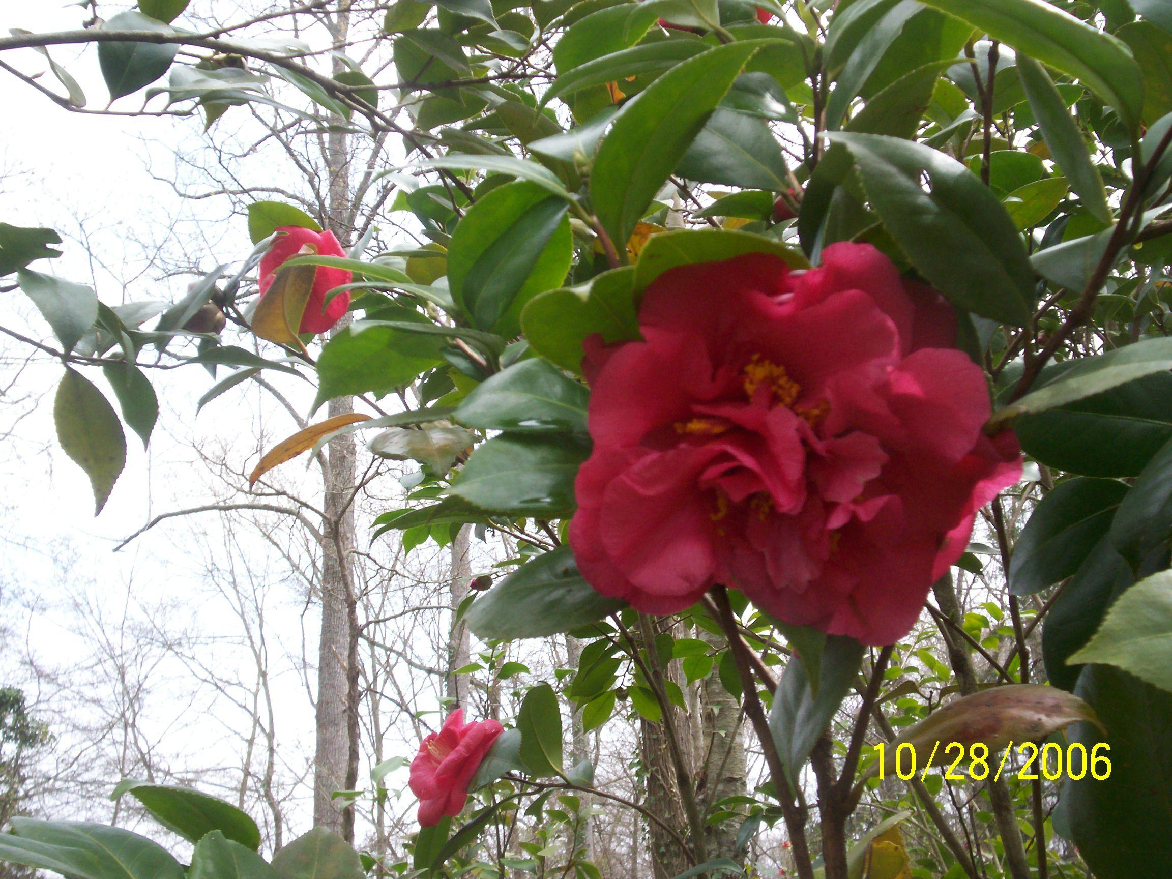 Flowers 3-28-2010 013